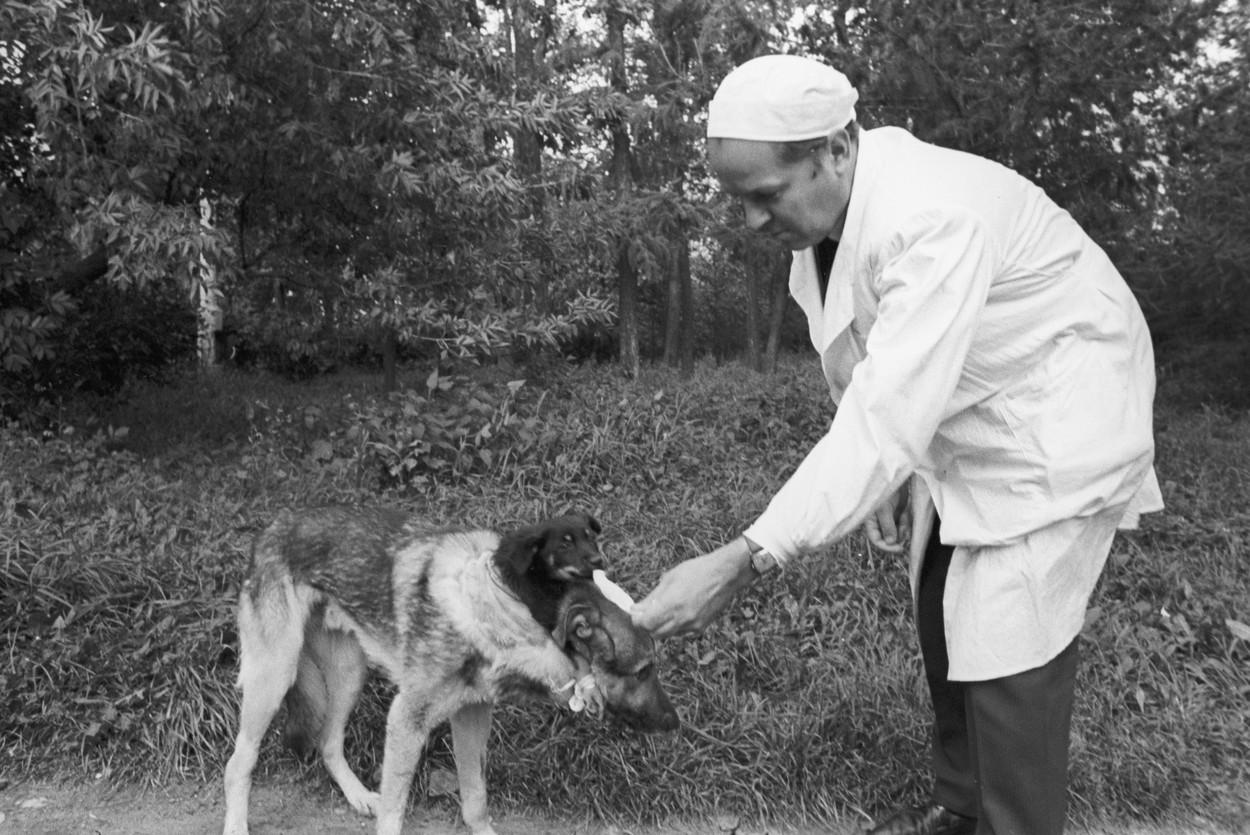 dvouhlavy pes 1