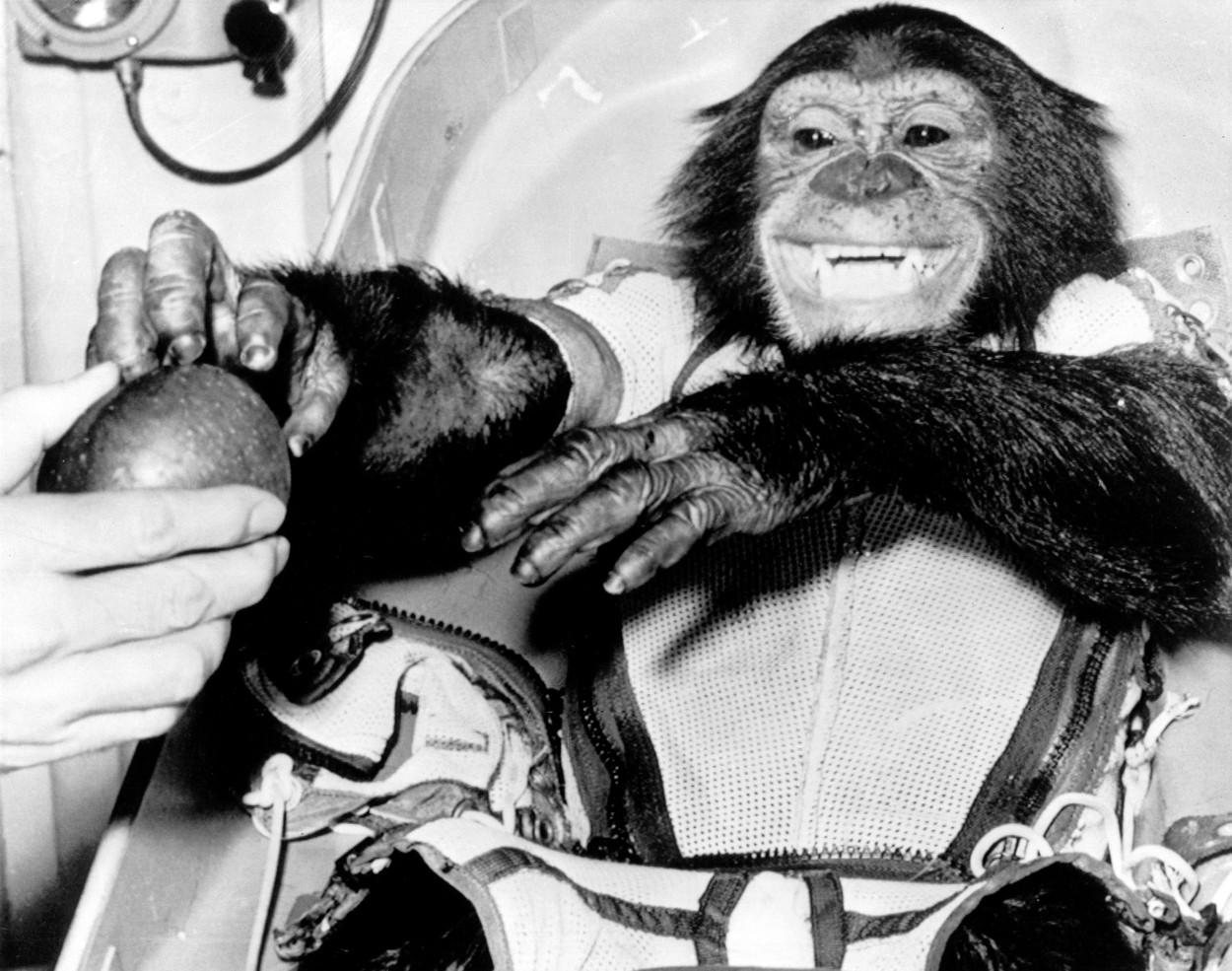 Ham simpanc astronaut