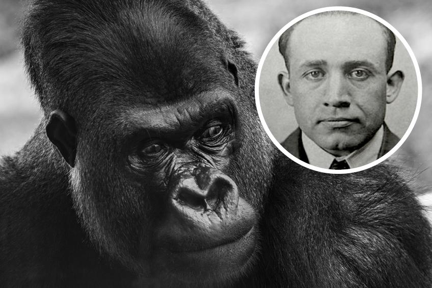 Gorili muz Earle Nelson